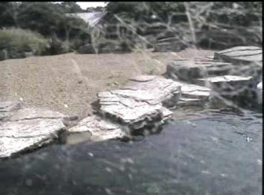 Chester Zoo Live Streaming Penguin Water Cam, England