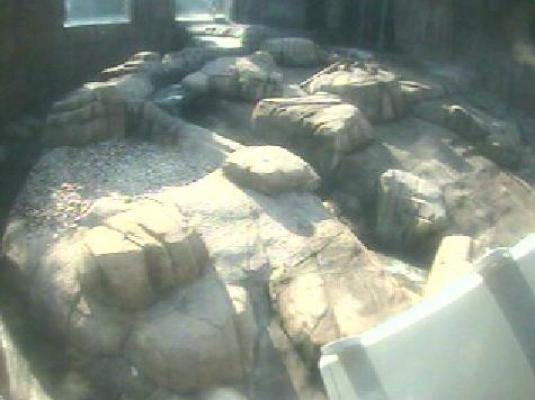 Pittsburgh Zoo Live Streaming Polar Bear Cam, Pennsylvania, USA