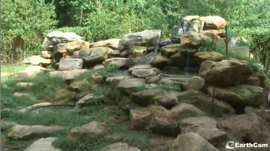 Hollywild Animal Park Live Streaming Bear Enclosure Cam, South Carolina