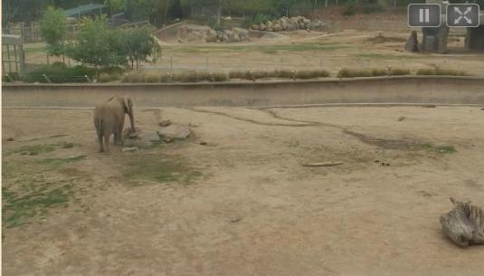 San Diego Safari Park Live Streaming Elephant Enclosure Cam, California