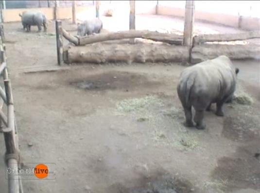 Blair Drummond Safari Park Live Streaming Rhino Animal Cam, Scotland