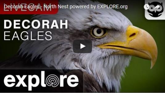 Live Camera Stream Feed Decorah Bald Eagles Nest Cam Iowa